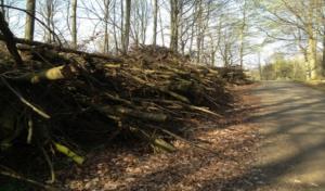 BiomassStupak